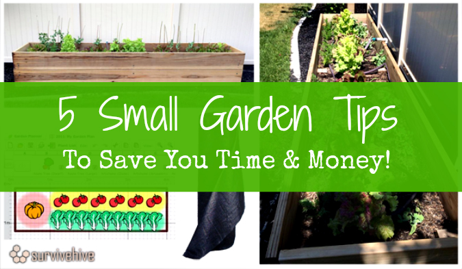 5 Small Garden Tips to Save You Time And Money