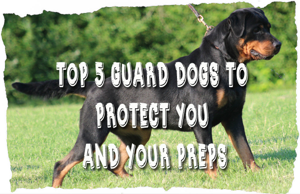 Top 5 Guard Dogs to Protect You and Your Preps