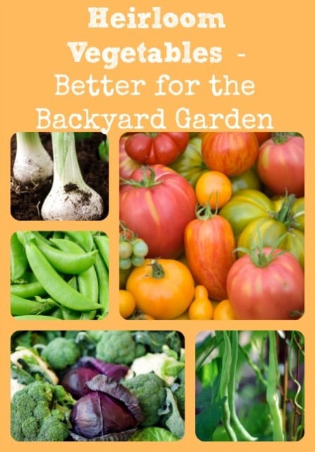 Why Heirloom Veggies Are Better For Homesteading