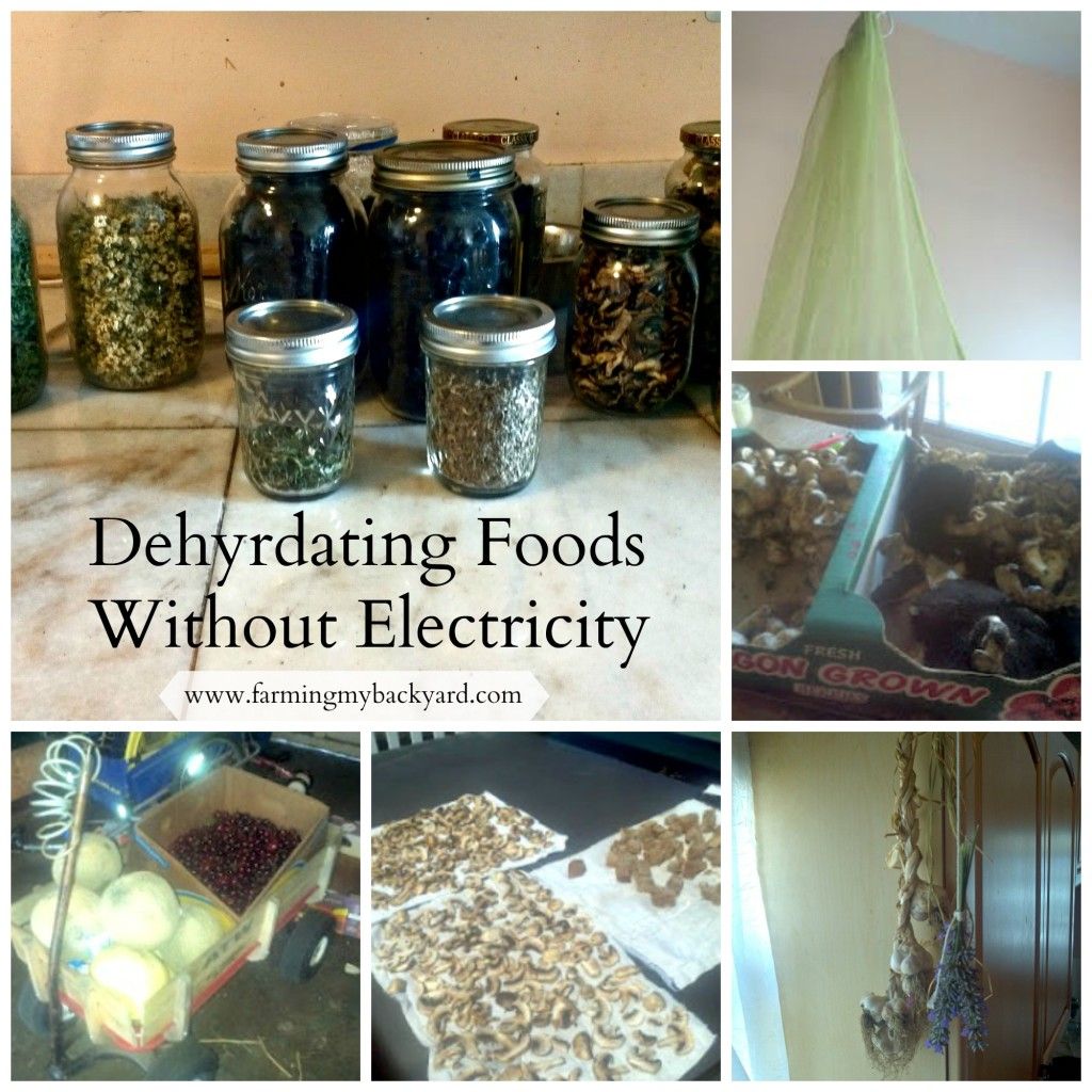 Electricity  Free Food Dehydration