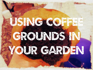 Using Coffee Grounds In Your Garden