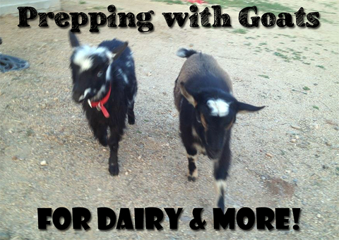 Prepping with Goats