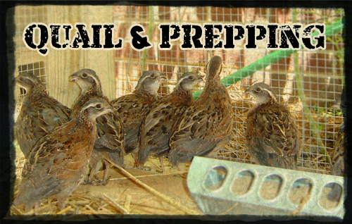Quail and Prepping