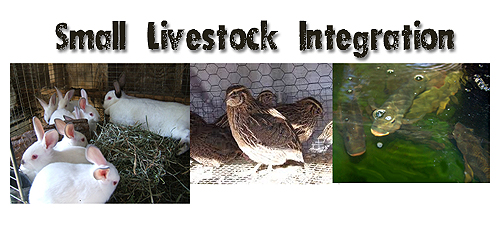 small livestock integration