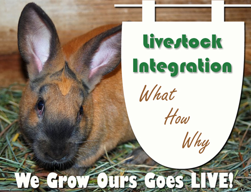 Live Show – BackYard Livestock Integration