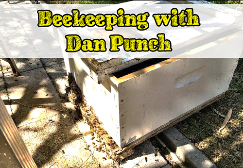 Beekeeping with Dan Punch | We Grow Ours via HostileHare.com
