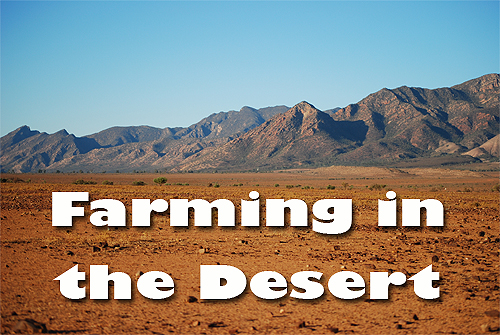Farming in the Desert - We Grow Ours | via HostileHare.com