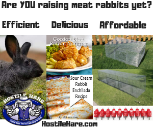 are You raising meat rabbits yet