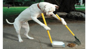 dogs on a raw diet poop less and their poop is easier to clean up