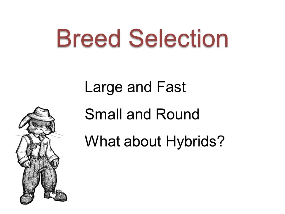 Meat Rabbit Breed Selection